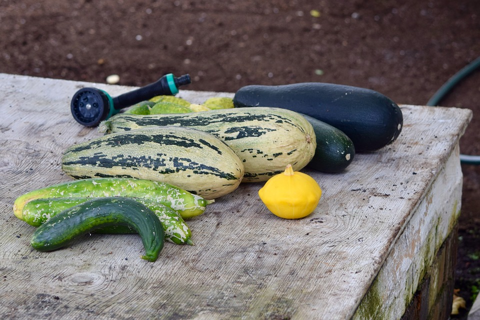 Greenhouse, Aubergine, Vegetable, Squash, Organic