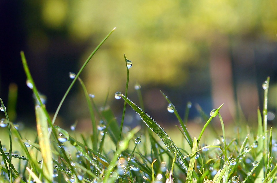 Water, Grass, Plant, Natural, Botanical, Organic