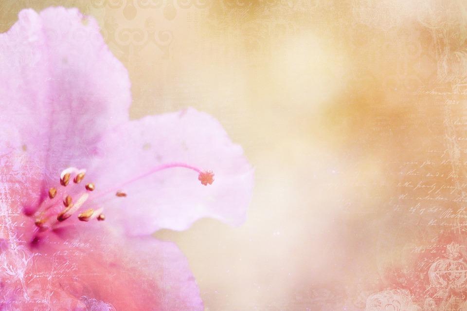Azalea, Background, Pink, Pattern, Structure, Ornament