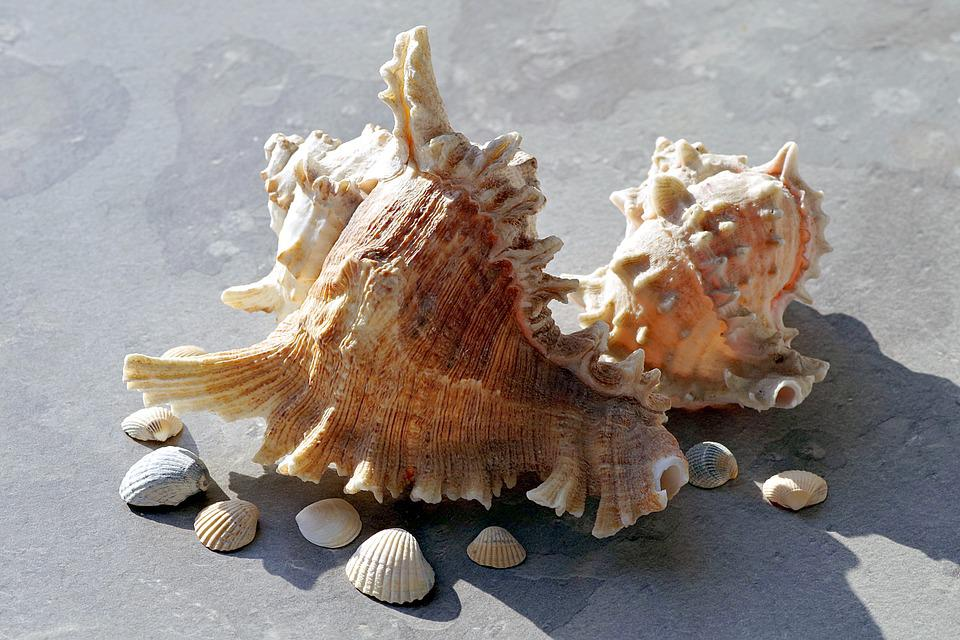 Shells, Holidays, Sea, Seashell, Rock, Ornament