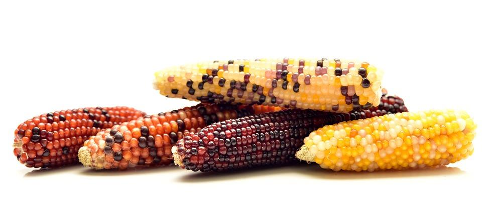 Corn, Ornamental Corn, Decoration, Cereals
