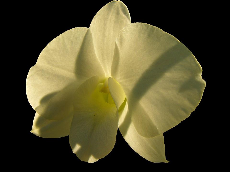 Dog Gift Greenhouse, Ornamental Flower, Blossom, Bloom