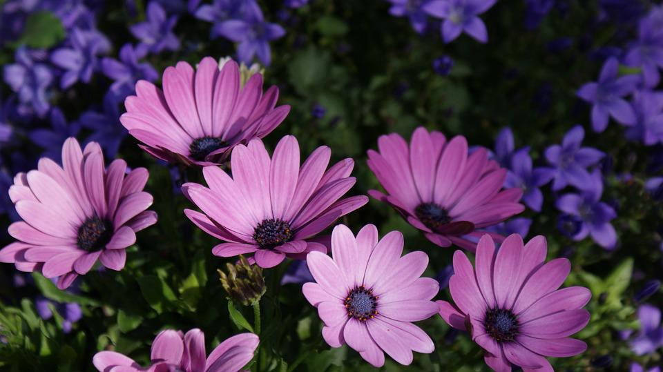 Flowers, Flower Garden, Ornamental Flower, Plant, Flora