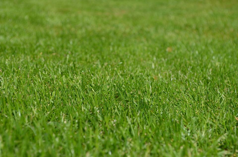 Rush, Meadow, Ornamental Grass, Spring, Grow, Green