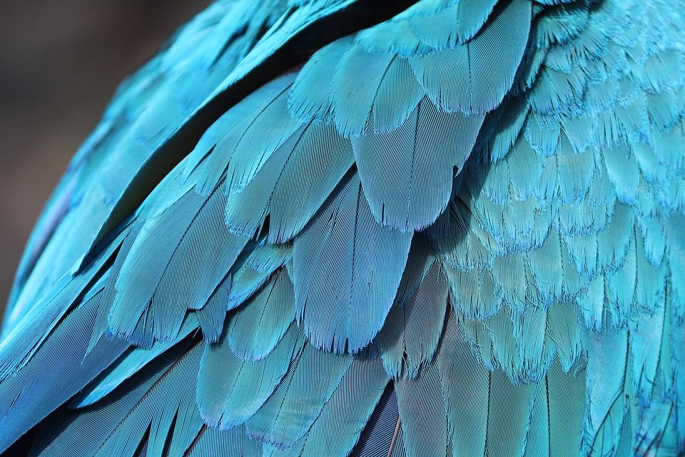 Parrot Feathers, Feathers, Plumage, Bird, Ornithology