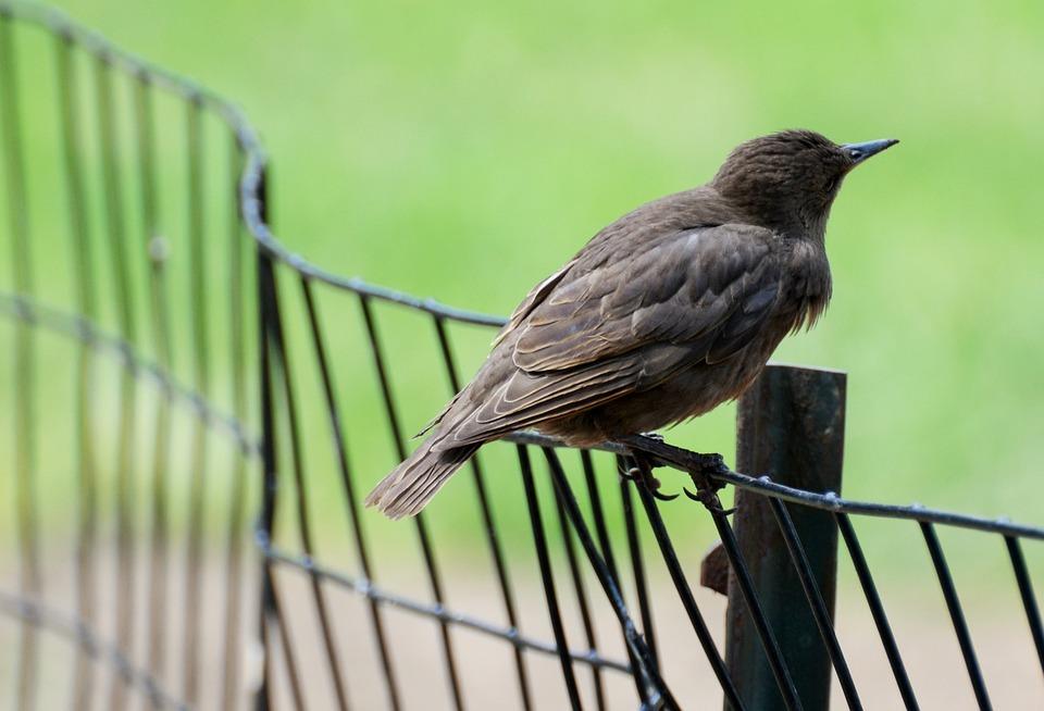 Bird, Ornithology, Nature, Plumage, Black, Pen, Animal