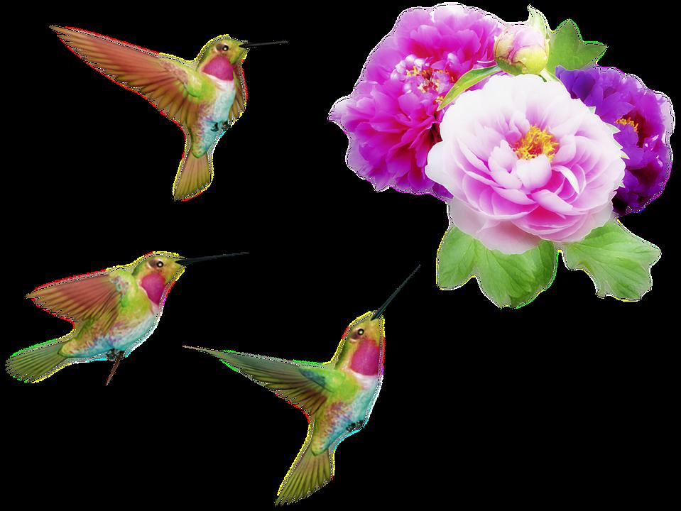Flowers And Hummingbirds, Orton Effect, Peonies