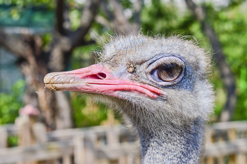 Ostrich, Zoo, New, Birds, Nature, Park, Animal