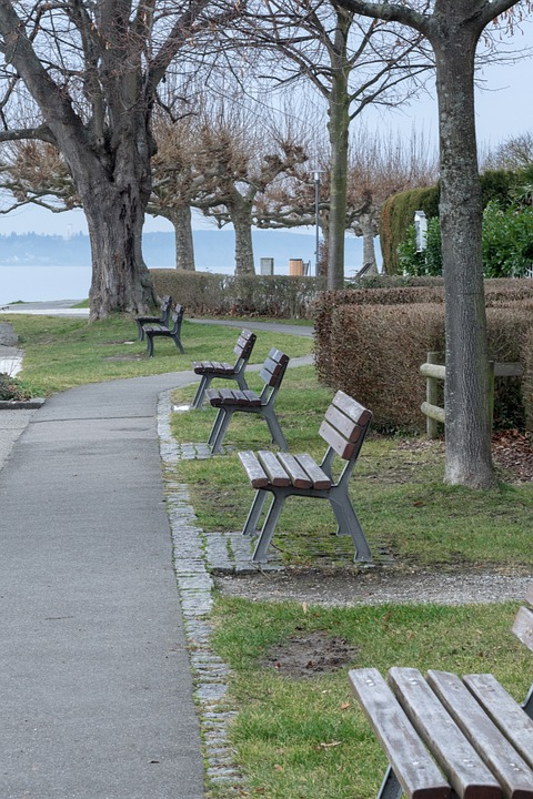 Bank, Bench, Rest, Nature, Seat, Out, Click, Forest