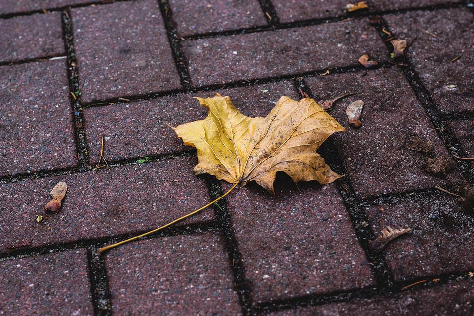 Leaf, Leaves, Nature, Out, Ground, Road, Dirty, Winter