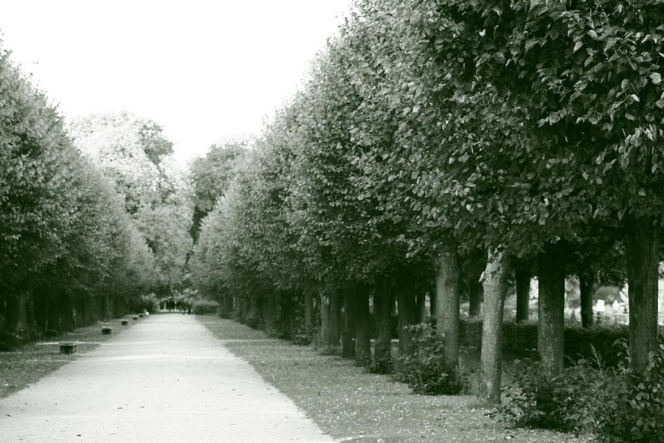 Park, Outdoors, Royal, Nature, Outdoor Activities