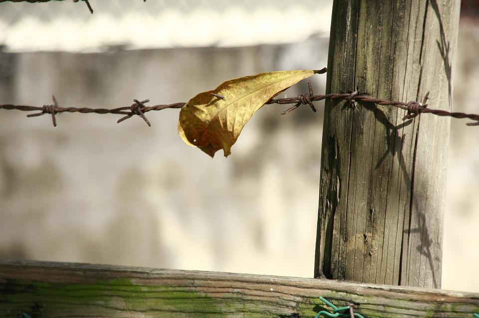 Leave, Barbwire, Border, Outdoor, Fence