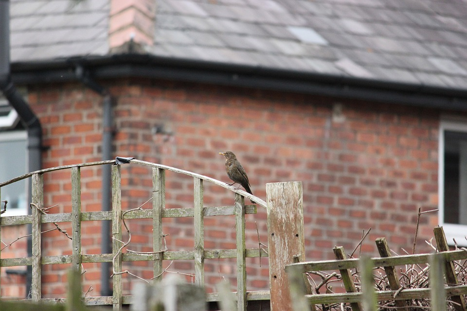 Bird, Fence, Outdoor, Wildlife, Beak, Natural, Outdoors