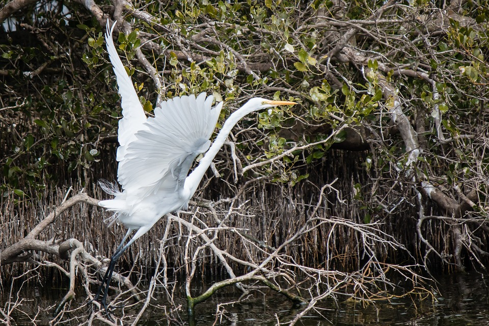 Nature, Waters, Wildlife, Bird, Outdoor, Feather, Wild