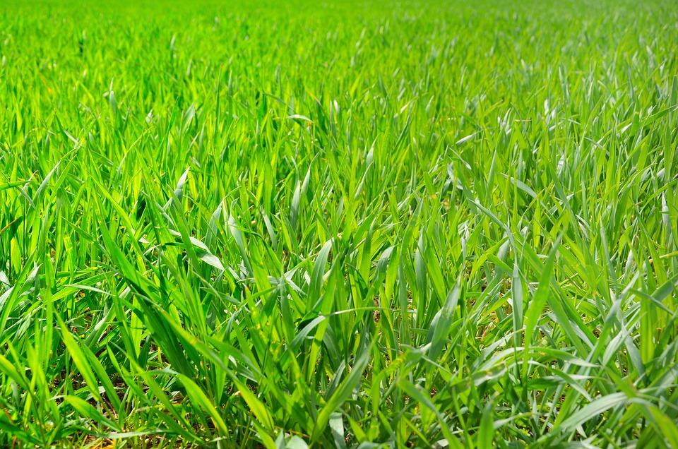 Field, Grass, Green, Nature, Outdoor, Countryside