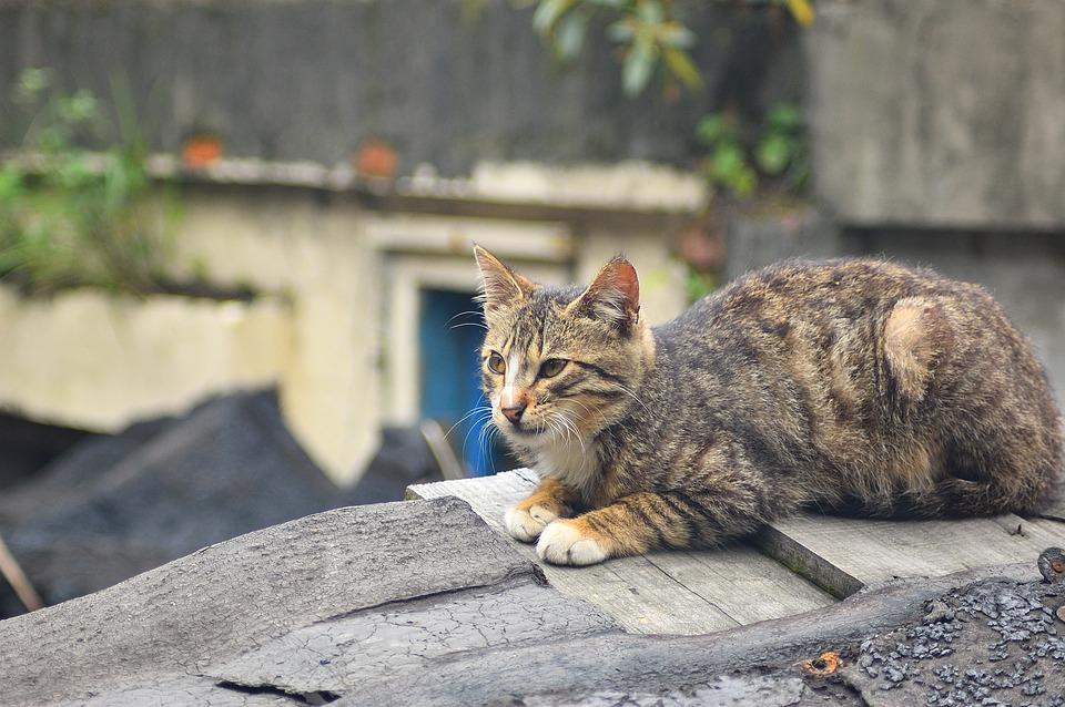 Cat, Nature, Animal, Cute, Outdoor