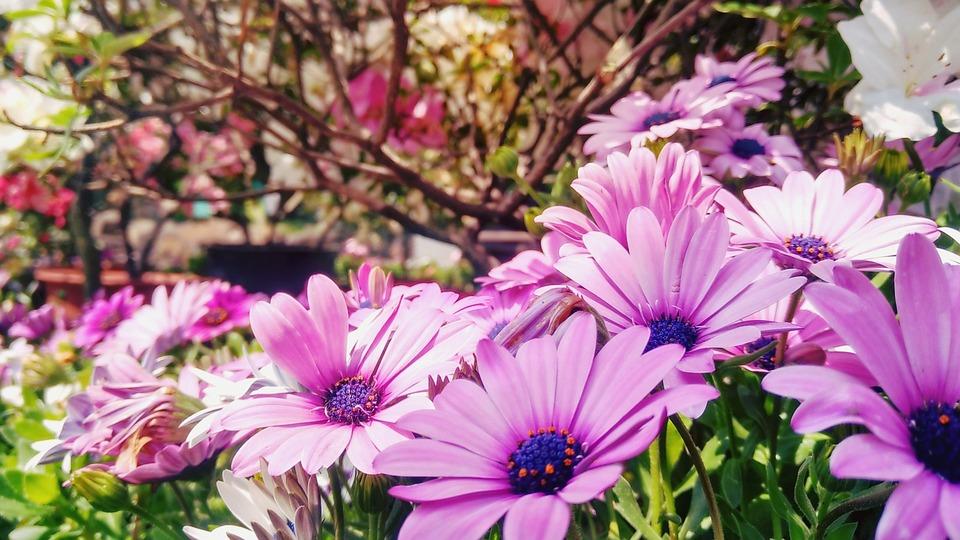 Wild Flowers, Purple Flower, Outdoor, Bright, Daisy