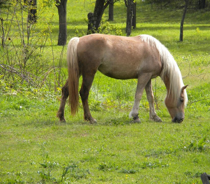 Horse, Green, Outdoor, Grass, Summer, Animal, Nature