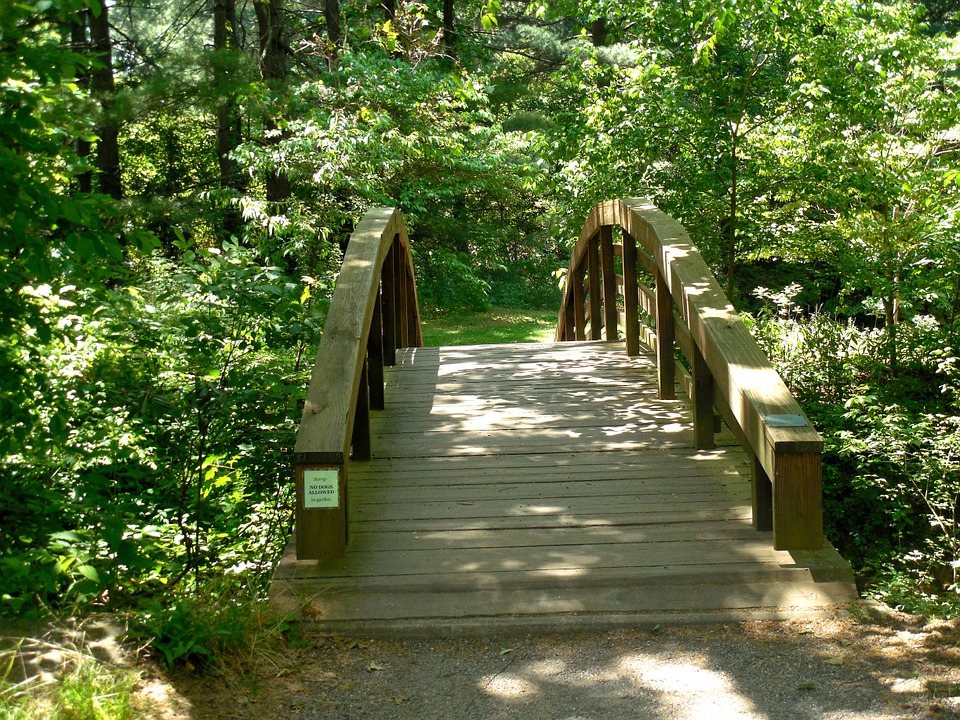 Wooden, Bridge, Nature, Wood, Landscape, Water, Outdoor