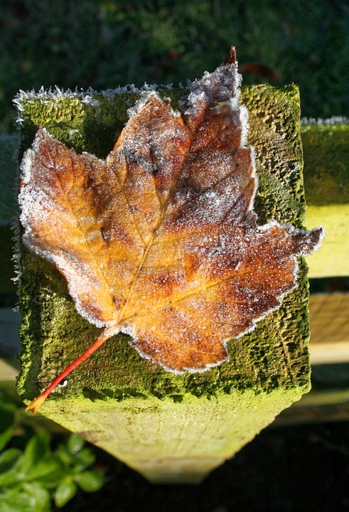 Leaf, Frost, Fence Post, Nature, Outdoor, Frosted
