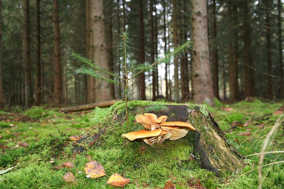 Natural, Mosser, Outdoor, Leaf, Plant, Softwood