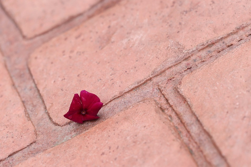 Little Flower On The Floor, Dark Red, Nature, Outdoor