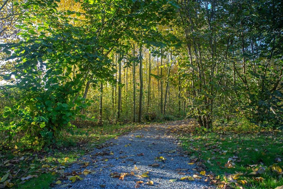 Nature, Park, Autumn, Landscape, Outdoor, Scenic, Heg