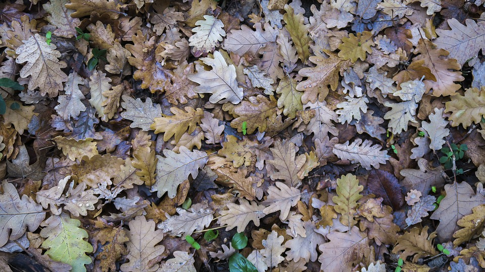 Leaf, Nature, Plant, Season, Outdoor, Fall