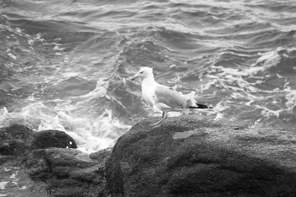 Body Of Water, Sea, Ocean, Nature, Roche, Outdoor