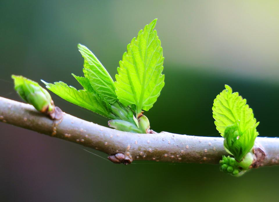 Leaf, Nature, Outdoor, Plant