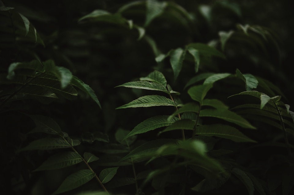 Green, Leaf, Plant, Nature, Outdoor