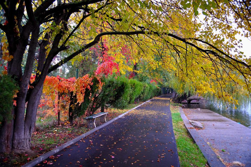 Park, Pathway, Outdoor, Road, Color, Autumn, Beautiful