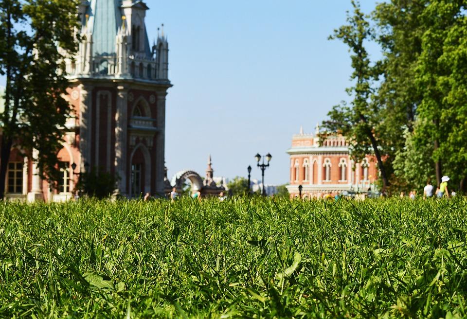 Grass, Park, Green, Summer, Day, Nature, Outdoor, Field