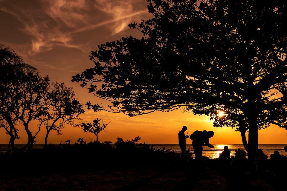 Sunset, Dawn, Twilight, Tree, Evening, Outdoor, Nature
