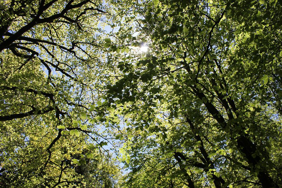Leaves, Sun Through Trees, Trees, Outdoor, Natural
