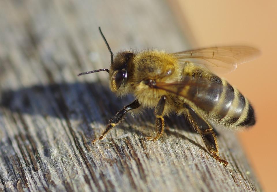 Bee, Sunshine, Warmth, Nature, Outdoor