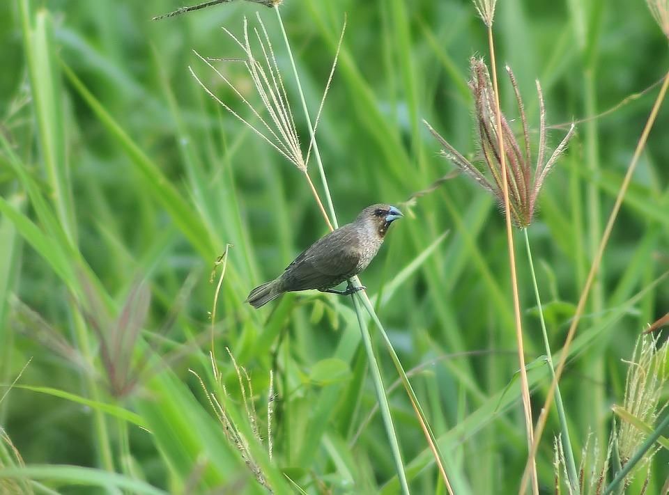 Nature, Grass, Wildlife, Outdoors, Animal, Field