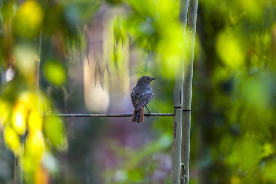 Bird, Nature, Animal, Wildlife, Wild, Feather, Outdoors