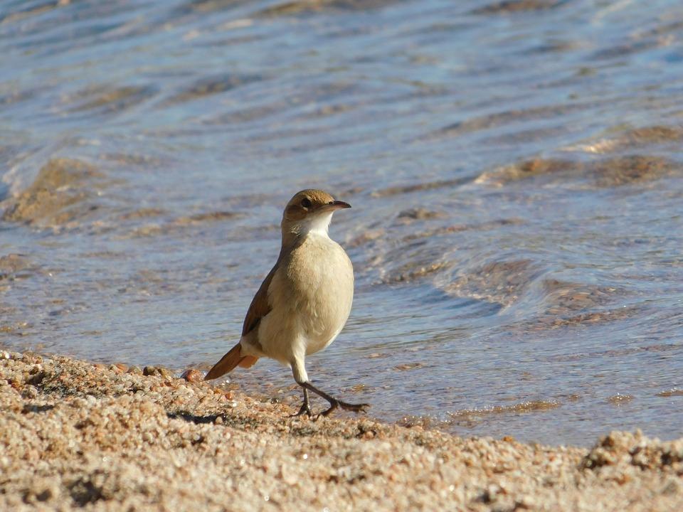 Birds, Wild Life, Nature, Animalia, Outdoors, Avian