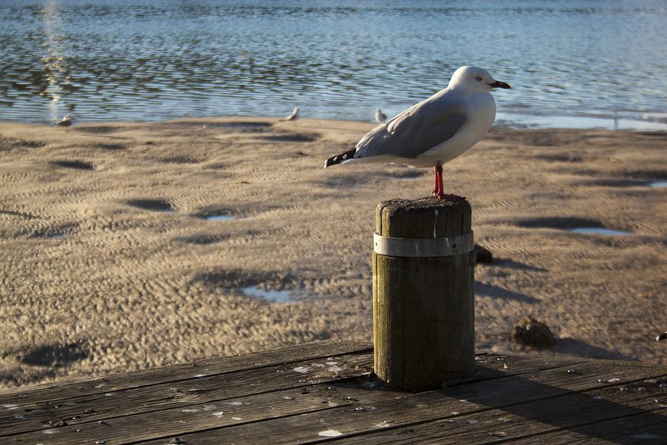 Water, Nature, Sea, Outdoors, Beach, Seashore, Bird