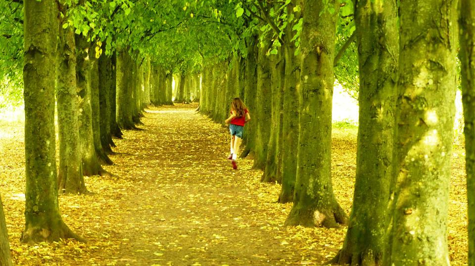 Trees, Running, Nature, Forest, Outdoors, Beautiful