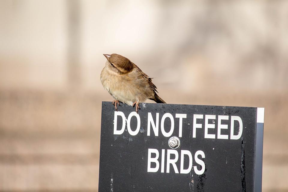Outdoors, Nature, Bird, Wildlife