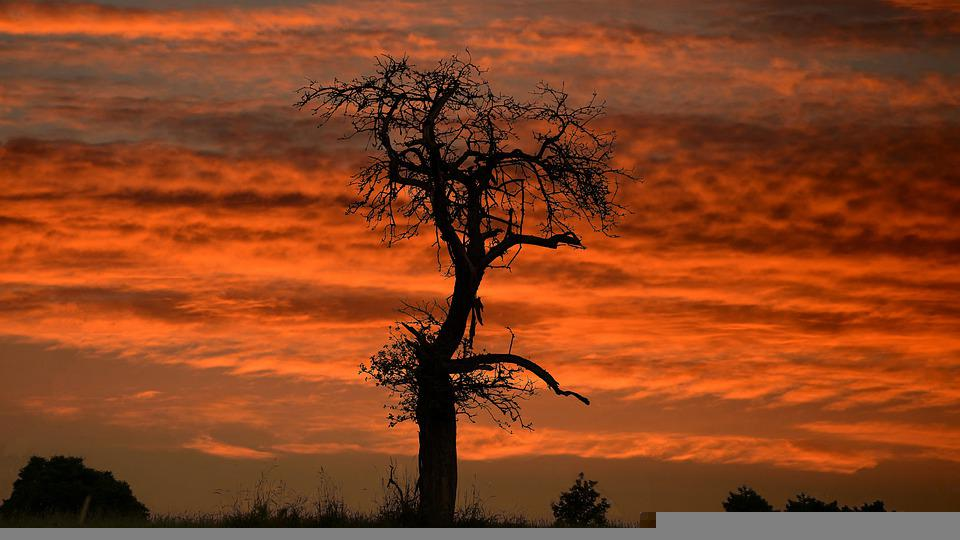 Dusk, Tree, Outdoors, Sky, Clouds, Sunset, Nature