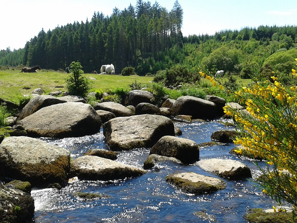 Stream, Countryside, Nature, Outdoors
