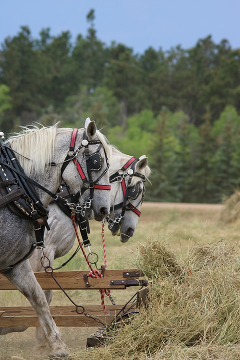 Cavalry, Nature, Outdoors, Farm, Grass, Horses, Cowboy