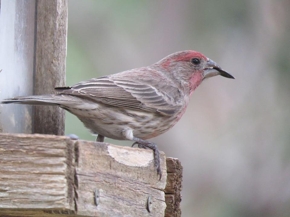Nature, Bird, Wildlife, Outdoors, Animal, Finch