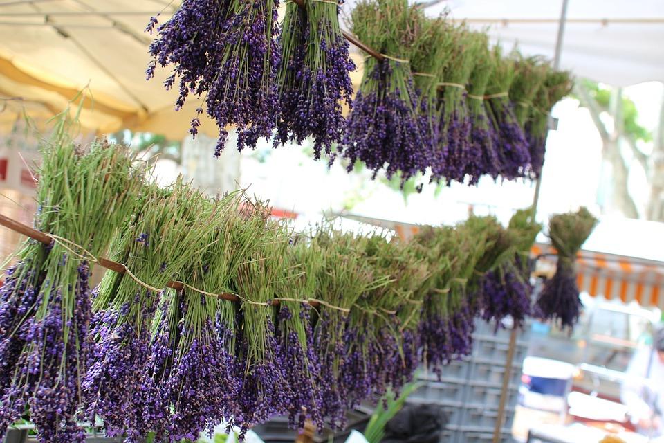 France, Lavender, Provence, Summer, Flower, Outdoors