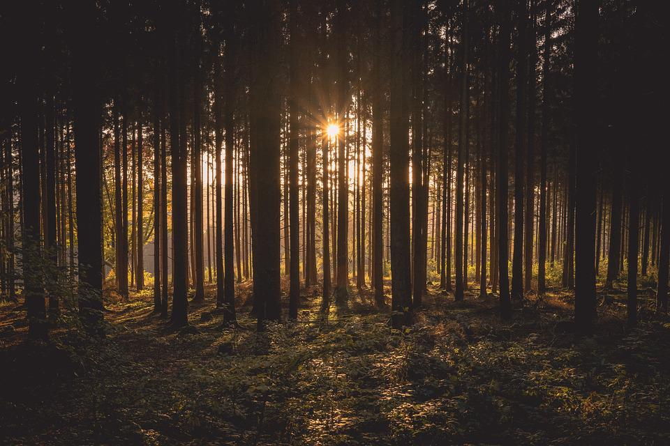 Dawn, Forest, Dusk, Landscape, Nature, Outdoors