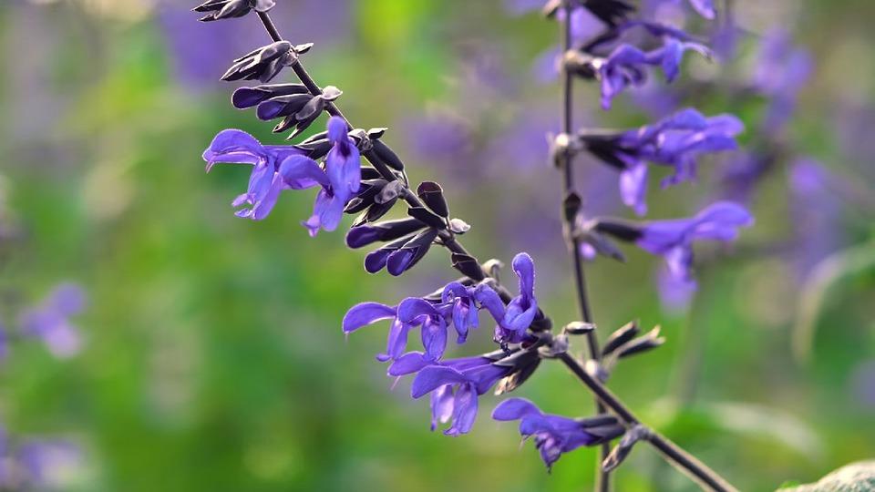 Flower, Nature, Flora, Outdoors, Leaf, Summer, Garden