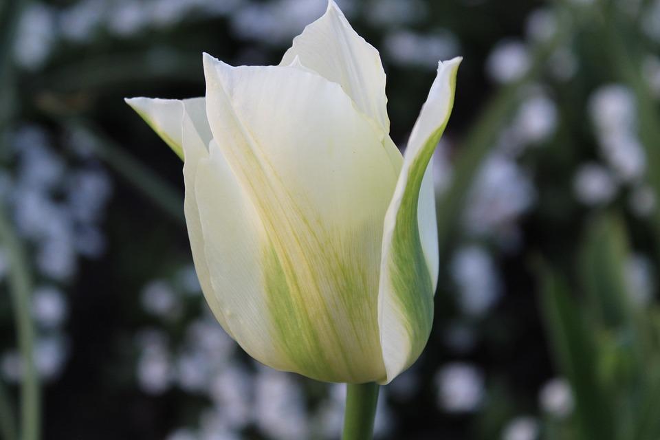 Flower, Nature, Plant, Garden, Outdoors, Petal